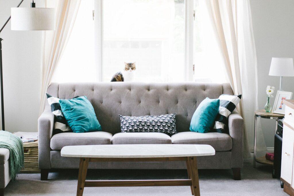 sofa and cat